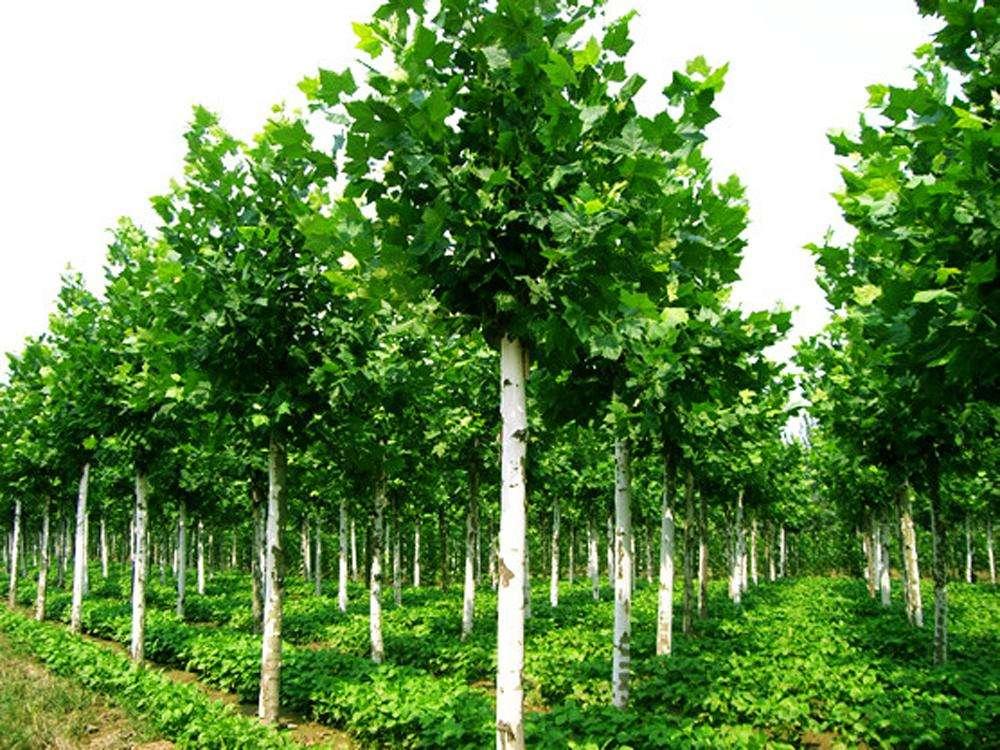 绿化养护技术措施